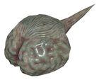 Strider brain model