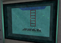 Leeches aquarium