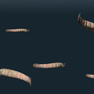 Leeches underwater.