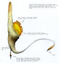 Alien fauna1