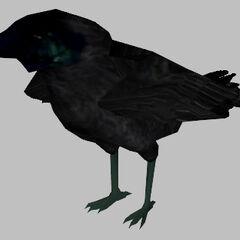 <i>Half-Life 2</i> crow model.