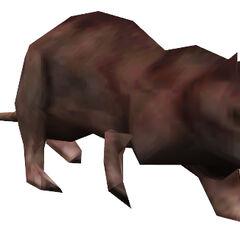 <i>Half-Life</i> rat model.