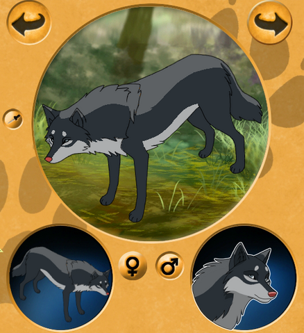 File:Darkstorm wolf 2.png