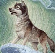 Wolf 2312