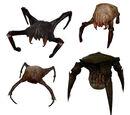 Crabe de tête