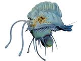 Медузий поплавок