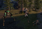 White forest hunters