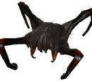 Crabe de tête venimeux