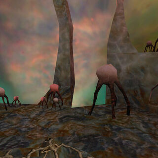Grupos de hongos