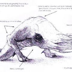 Primeros conceptos para el Bullsquid
