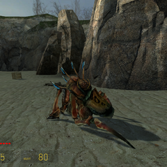 Cadaver de Antlion Guardian en Half-life 2
