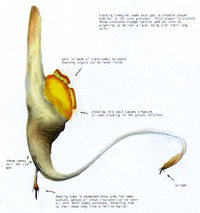 Yellow Alien Fauna