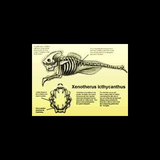Imagen encontrada en Opposing Force sobre el Ictiosaurio