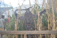Scarecrow Skeleton