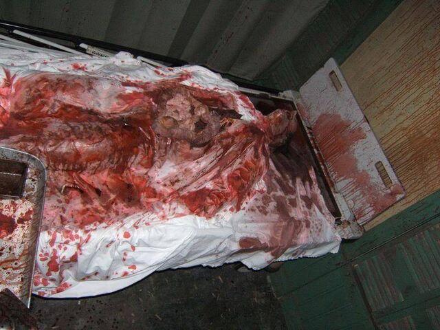 File:Screamhouse 3 Corpse 2.jpg