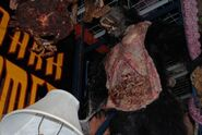 HHN Hallowd Past Props 46