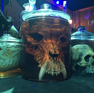 HHN 29 Monster Skull