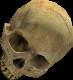 Cráneo H2