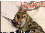 Gatico:3