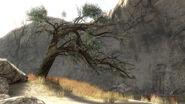 HR-Szurdok Ridge's trees 01 (Tip of the Spear)