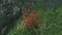 Reach flora und fauna