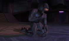 Arbiter kneel