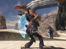 Jackal Minori Halo 3