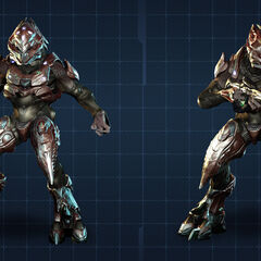 Elite Zelota in Halo 4