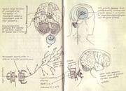 Interfaz neural