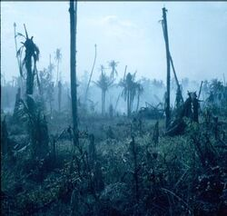 JungleAftermath6-49a