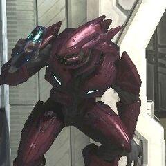 Elite Maggiore in Halo 3