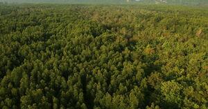 Beta Onyx Forest