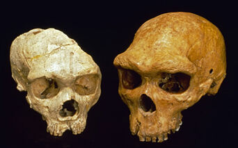 Anhudeni-skull