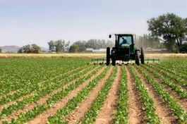 Agricultura tacenirok