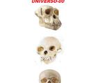 Universo-00 Previous: Evolution
