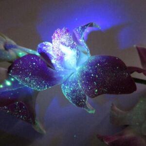 Flor del loto brillante