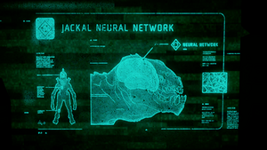 H5G-Jackal Neural Network