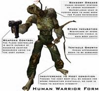 Warrior Form Human2