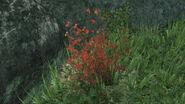 HaloReach - Flora
