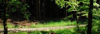 File:East Lindellin Forest 1 image.jpg
