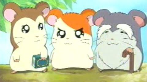 Hamtaro Episode 11 The Wise Elder Ham