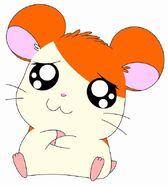 Hi-hamtaro-little-h-4e261460539f1