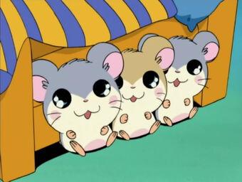The Three Hambini | The Hamtaro Wiki | Fandom