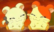 Bijou & Hamtaro