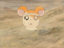 Hamtaro in a sandy situation