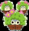 CactusBrosS