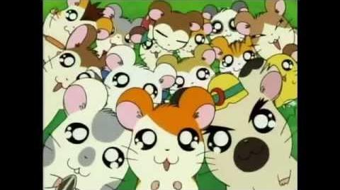 Hamtaro op latino dating