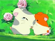 Bocadín y Hamtaro conociendose