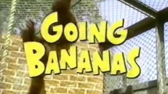 Miss Banana - Abertura