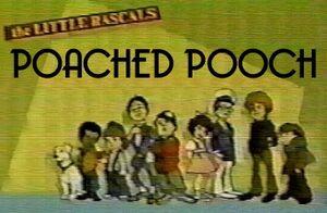 PoachedPooch